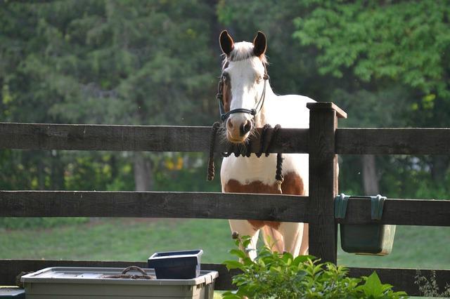 Bien installer la clôture électrique pour vos chevaux