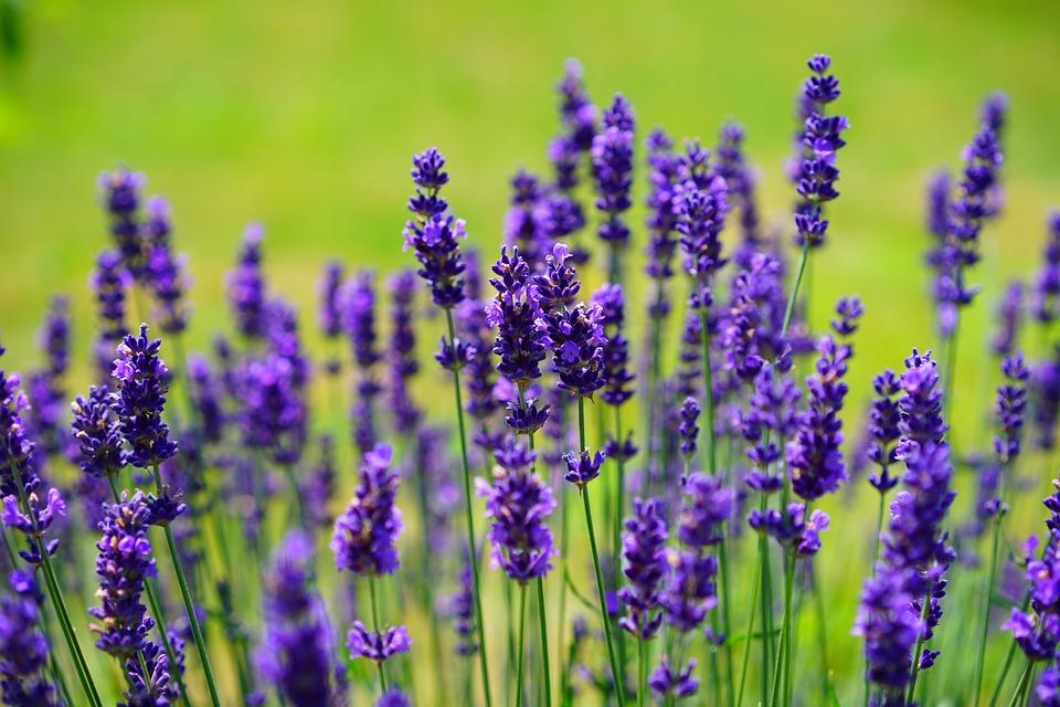 Ces remèdes naturels qui soigneront vos petits bobos en été